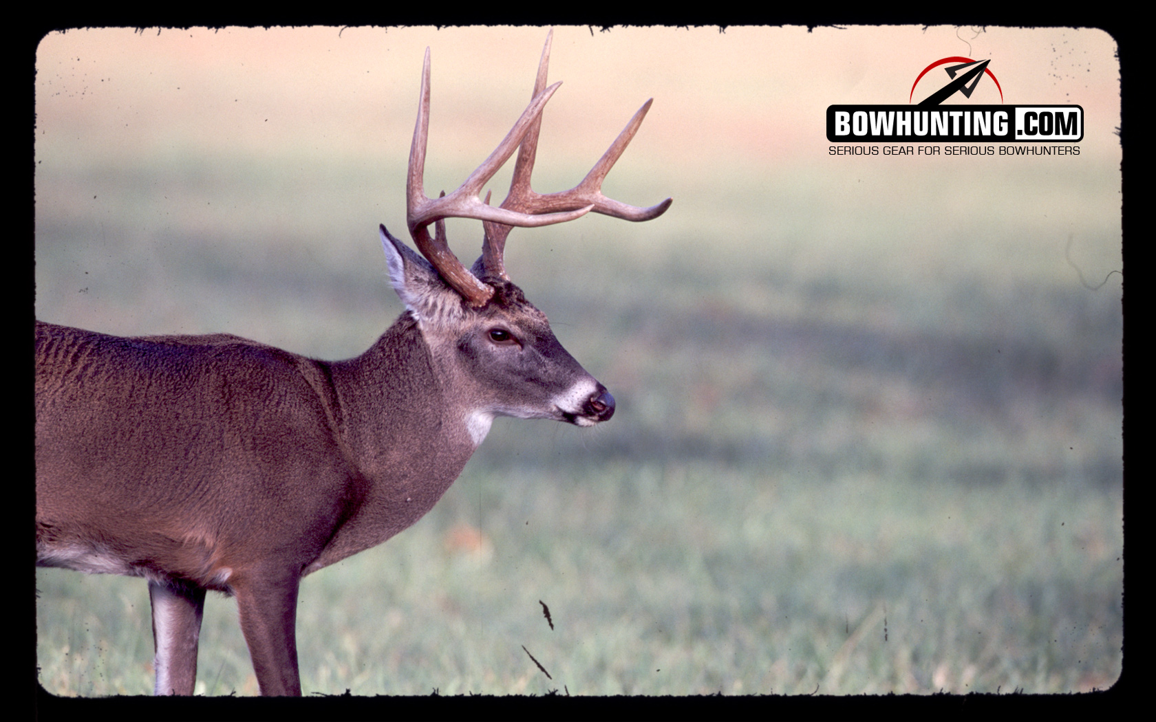 Wallpapers Archive Bowhunting Com