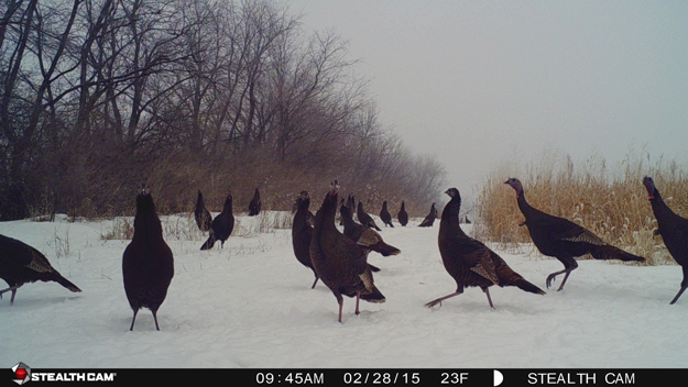 It's Not Turkey Season Yet…But That Didn't Stop This Guy