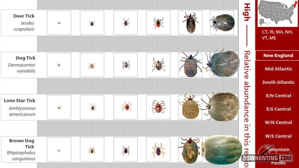 Tick Identification is important as different species are prone to varying diseases. Be sure to know which ones live in your neck of the woods.