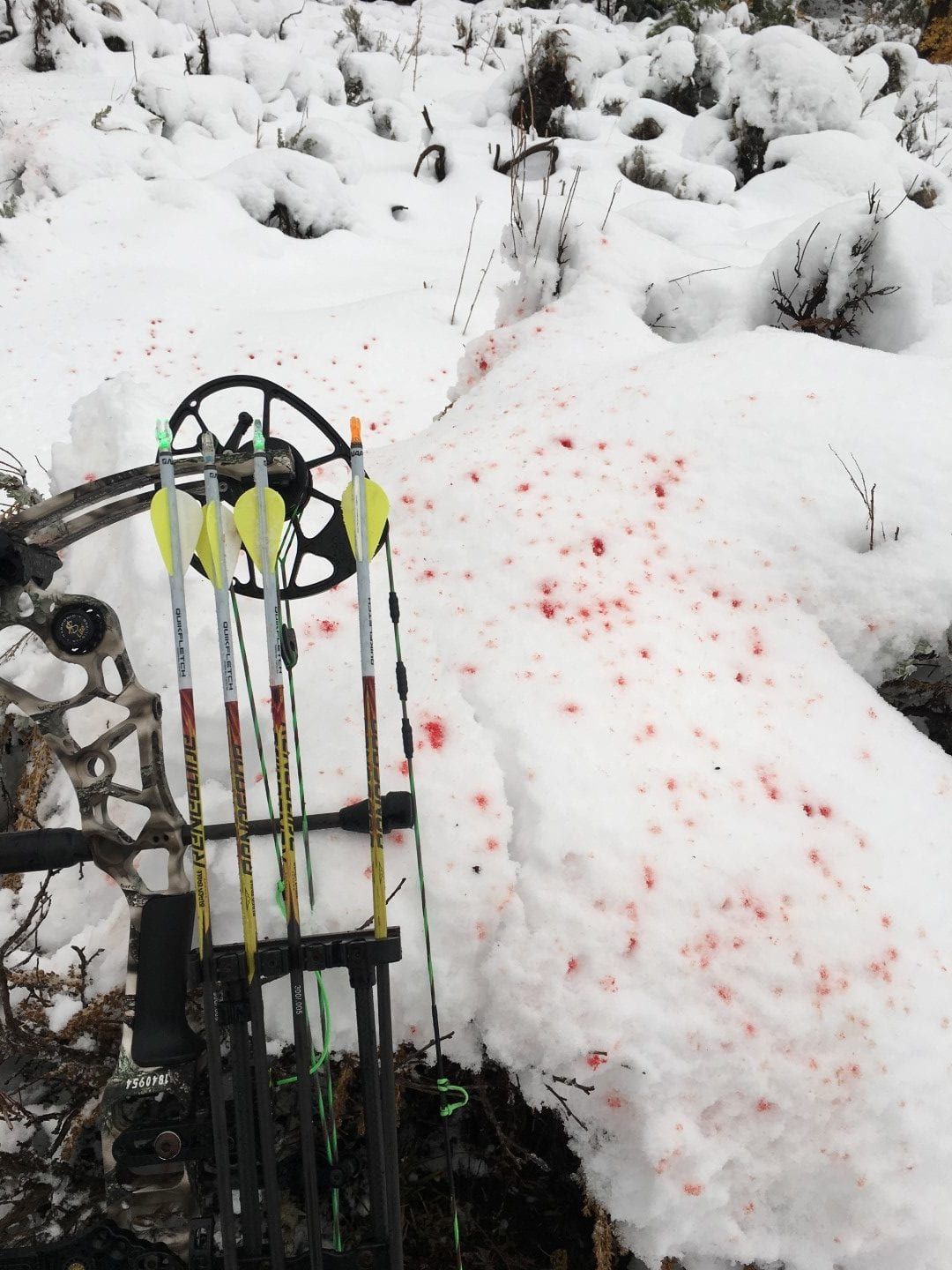bloodtrail in the snow